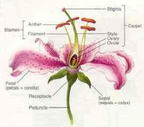 Generalised_Flower_Diagram